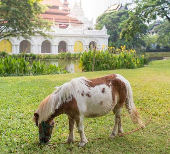 pony rides for kids at kid friendly Hotel Dhara Dhevi Chiang Mai Thailand