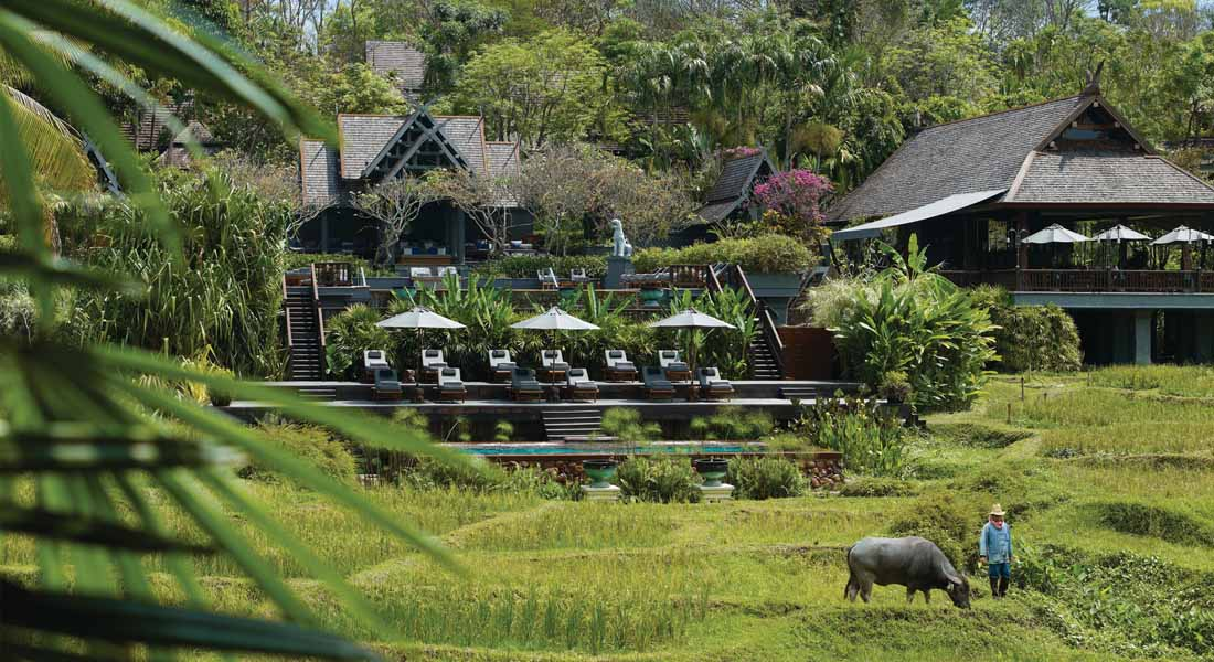 paddy fields at kid-friendly Hotel Four Seasons Chiang Mai Thailand