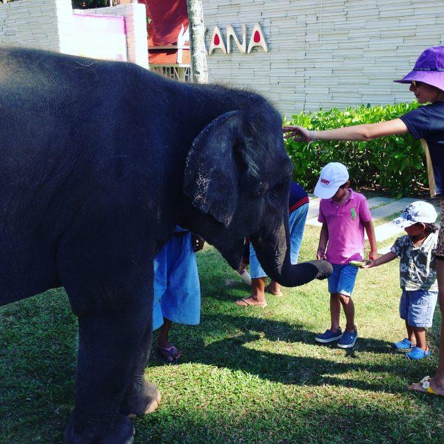 Angsana-Phuket-Elephant